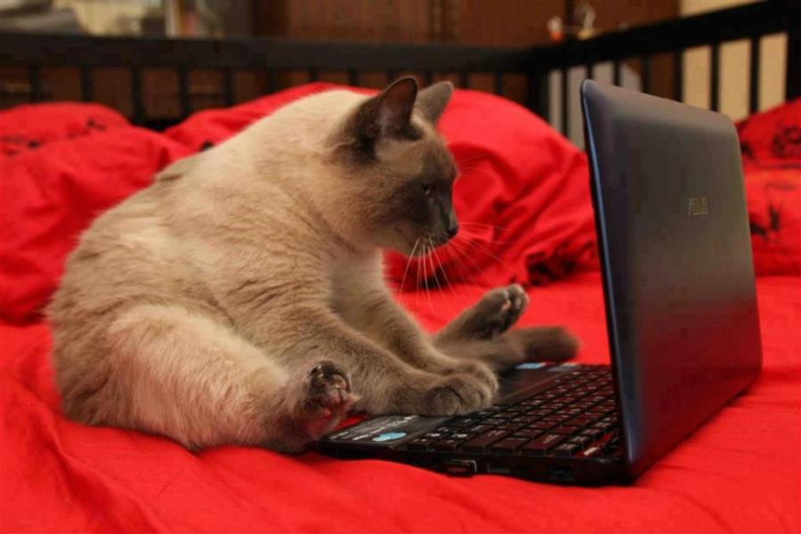 Kompiuteris lovoje